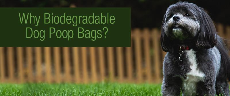 Why Biodegradable Dog Poop Bags?