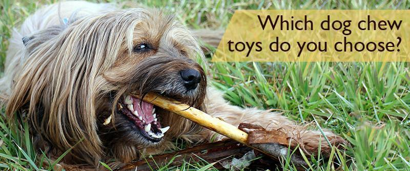 Which dog chew toys do you choose?