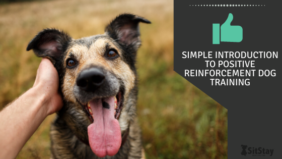 Simple Introduction To Positive Reinforcement Dog Training