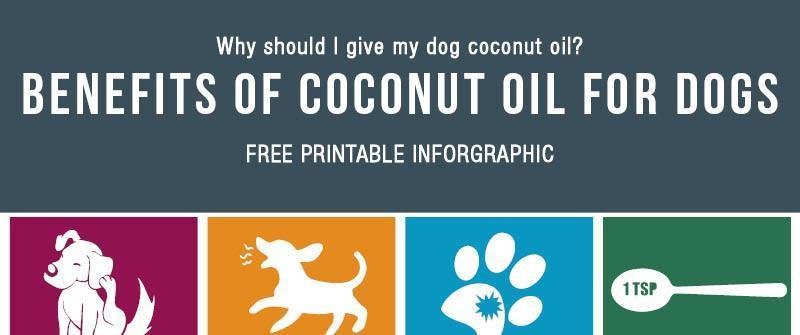 The Benefits Of Coconut Oil For Dogs (Free Printable)