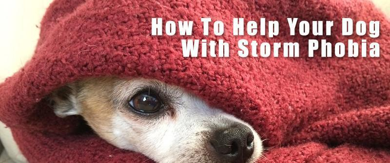 How to Help Your Dog with Storm Phobia