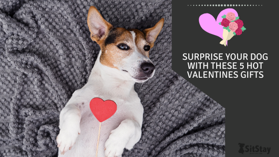 Surprise your dog with these 5 hot valentines gifts