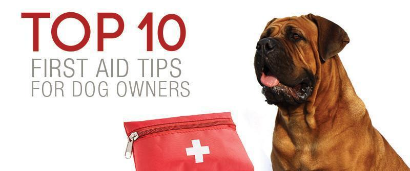 Top 10 First Aid Tips for Dog Owners