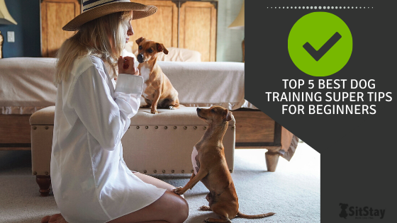 Top 5 Best Dog Training Super Tips For Beginners