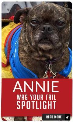 Wag Your Tail Spotlight - Featuring Annie