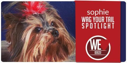 Wag Your Tail Spotlight - Featuring Sophie