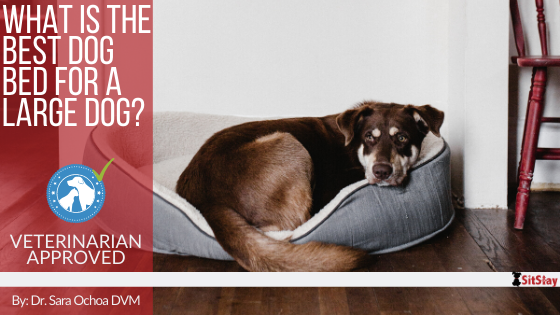 What is the Best Dog Bed for a Large Dog?