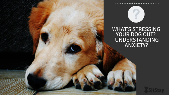 What's Stressing Your Dog Out?  Understanding Anxiety