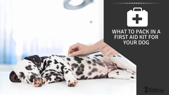 What to pack in a first aid kit for your dog