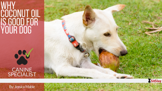 Why Coconut Oil is Good For Your Dog