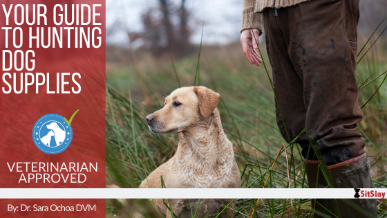 Your Guide to Hunting Dog Supplies