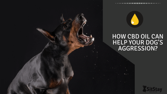 How CBD Oil Can Help Your Dog's Aggression?