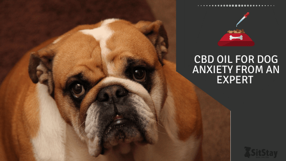 CBD Oil For Dog Anxiety From An Expert