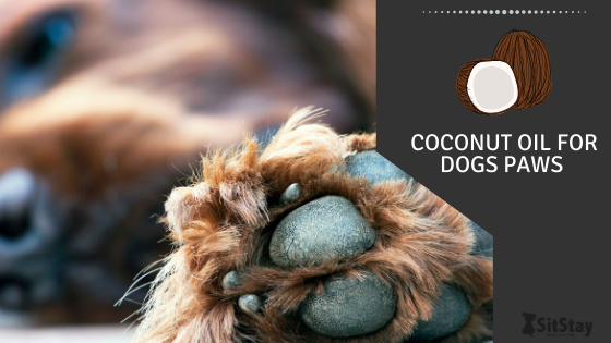 Coconut Oil for Dogs Paws