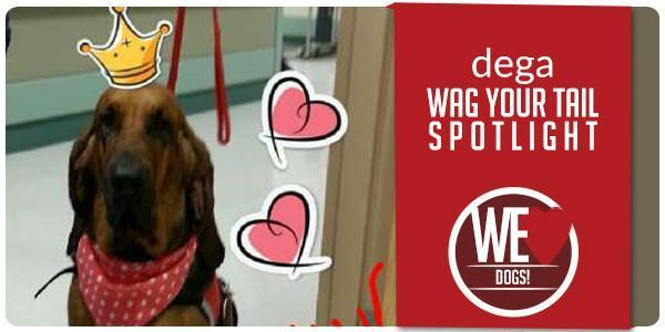 Wag Your Tail Spotlight - Featuring Dega