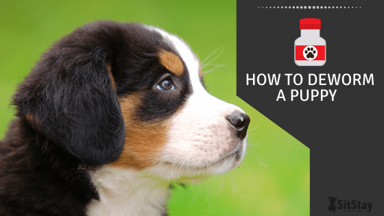 how to deworm a puppy