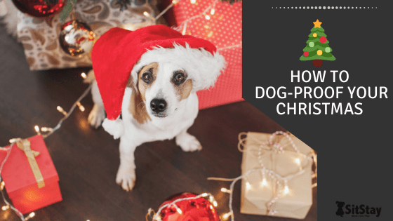 How To dog-proof your Christmas