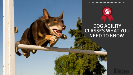 Dog Agility Classes: What You Need to Know!