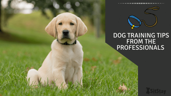 dog training tips from the professionals