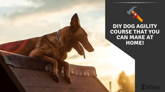 Diy Dog Agility Course That You Can Make At Home