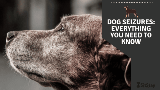 Dog Seizures: everything you need to know
