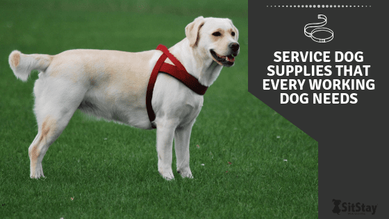 Service dog supplies that every working dog needs