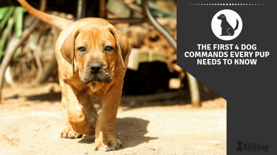 The First 4 Dog Commands Every Pup Needs To Know