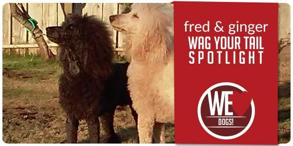 Wag Your Tail Spotlight - Featuring Fred & Ginger