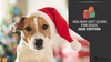 Holiday gift guide for dogs - 2020 edition