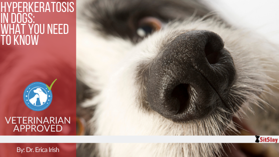 Hyperkeratosis in Dogs: What you Need to Know!
