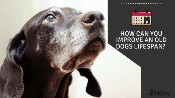 how can you improve an old dogs lifespan