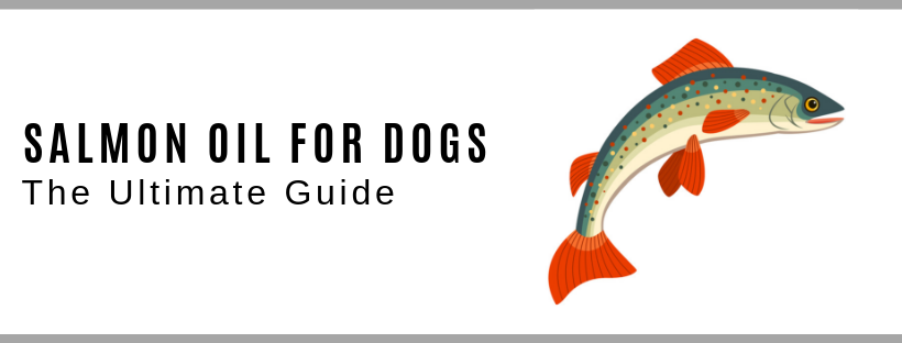 Salmon Oil for Dogs - The Ultimate Guide