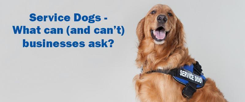 Taking your service dog to a business - what can (and can't) they ask?