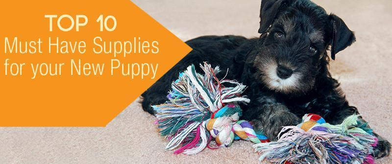 Top 10 Must Have Supplies For Your New Puppy
