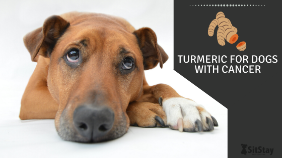 Turmeric For Dogs With Cancer