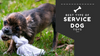 What Are the Best Types of Service Dog Toys?