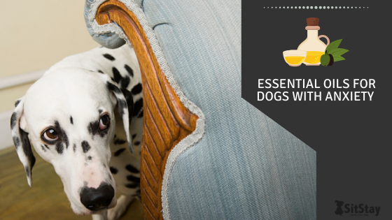 Essential Oils for Dogs With Anxiety