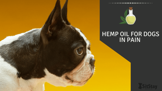 Hemp Oil For Dogs In Pain