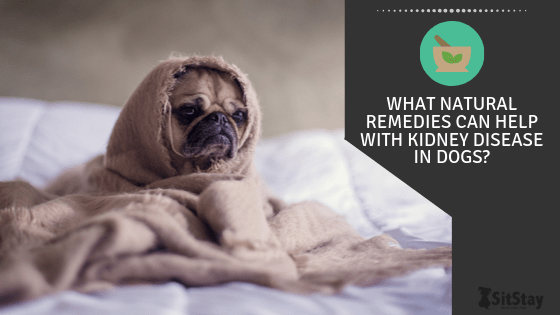 What Natural Remedies Can Help With Kidney Disease In Dogs Sitstay