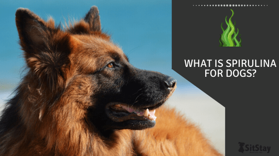 what is spirulina for dogs