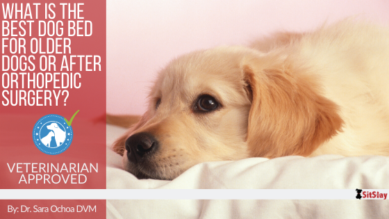 What is the Best Dog Bed for Older Dogs or After Orthopedic Surgery?