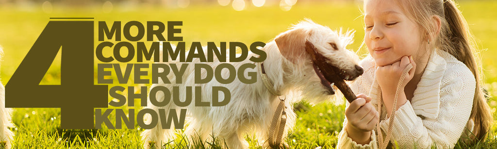 More Advanced Commands All Dogs Should Know