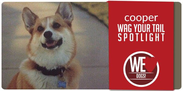 Wag Your Tail Spotlight - Featuring Cooper