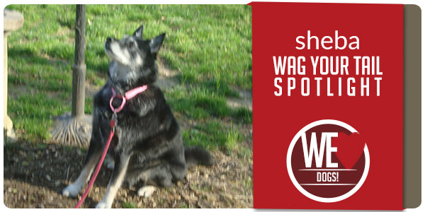 Wag Your Tail Spotlight Featuring Sheba