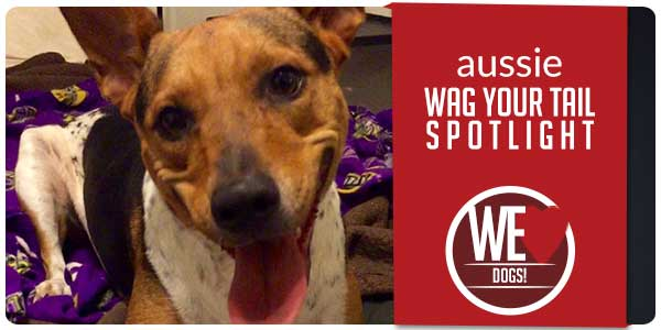 SItStay Wag Your Tail Spotlight Featuring Aussie