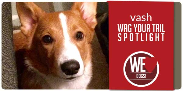 SitStay Blog Wag You Tail Spotlight - Featuring Vash