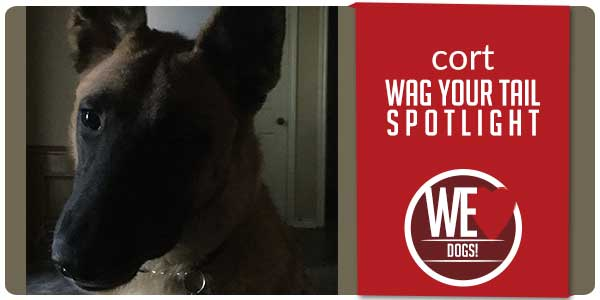 SitStay Blog Wag Your Tail Spotlight - Featuring Cort