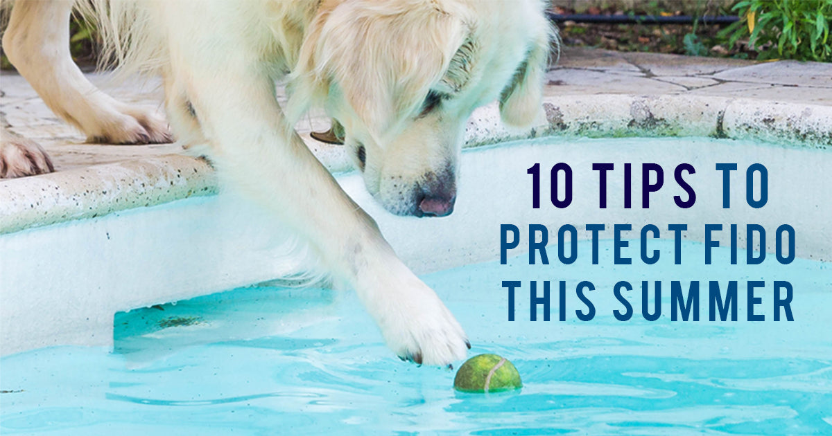 yellow lab reaching for a tennis ball in a pool with one paw, the text 10 tips to protect Fido this summer is displayed to the right of the dog