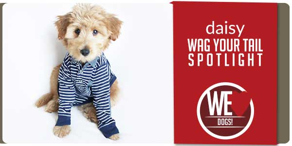 SitStay Blog Wag You Tail Spotlight - Featuring Daisy
