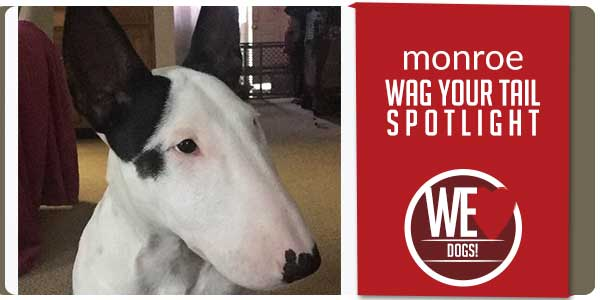 SitStay Wag Your Tail Spotlight - Featuring Monroe